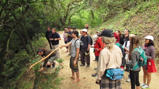 Leading the Bay Area Foragers class at Strawberry Canyon