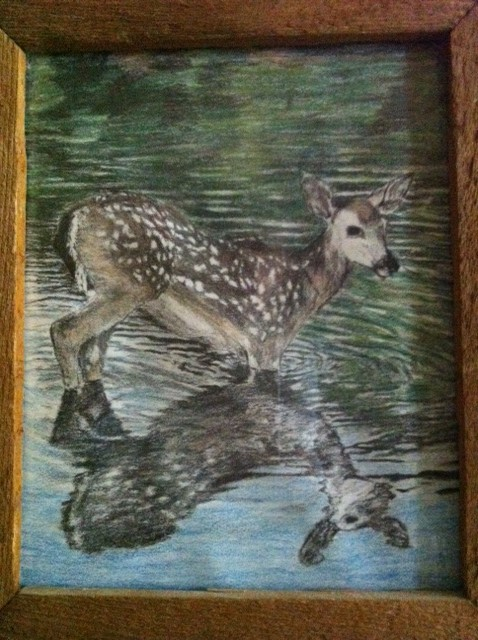 My colored pencil drawing of a deer fawn standing in water.